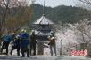 上半年访日游客增17% 日本政府拟向外国游客征税