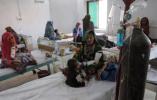 巴基斯坦基孔肯雅病毒蔓延 4人死亡数百人感染