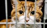 小公寓养了130只猫