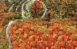 又到一年赏枫季 六种赏枫方式看遍日本万种枫情
