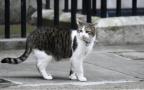 """""""杀猫恶魔""""被判刑"""