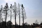 加州森林大火持续