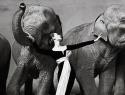 朵薇玛女神与大象