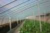 寿光推广智能蔬菜大棚:手机是俺的新农具