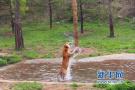 济南野生动物世界送您一个春节礼包 请注意查收!
