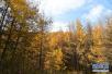 国家林业局:到2020年将建成6个国家级森林城市群!