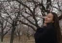 万亩杏花竞开放