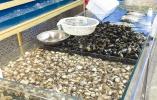 鞍山:休渔期将近 海鲜价格不涨反降
