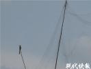 南京玄武湖畔的水杉林有人张网捕鸟