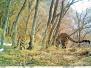 河南济源太行山区首拍到金钱豹群体活动影像