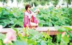 六月荷花盛开 白河国家湿地公园引游客观赏