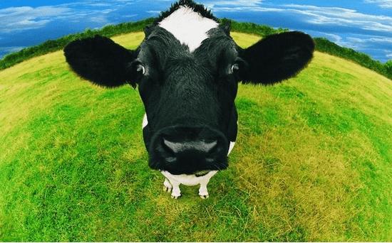 爱尔兰奶粉遭污染 多国发预警
