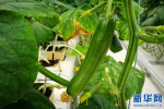 吴桥青年通过互联网与农业结合实现产业升级