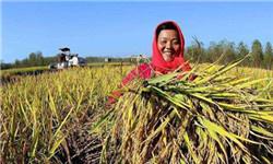 联合国粮农组织称赞中国减贫成就