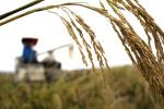 数百万废弃农药袋污染农田,该谁回收?卡在何处?