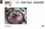 超恶心!重庆知名火锅店吃出死老鼠 店方主动报备并报案