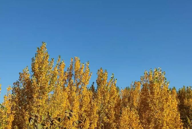 深秋里的樱桃沟,撩人心弦