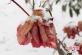 河南宝丰:看见冬季花与雪