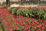 80萬盆鮮花點靚市容 寧波街頭花團錦簇喜迎春節