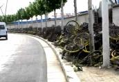 郑州人行道万辆共享单车被枯草覆盖 市民:已放两年了