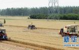 """阜城全力以赴奋战""""三夏"""" 43.3万亩小麦喜获丰收"""