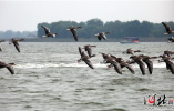 走,去衡水湖赏荷观鸟