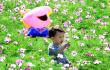 假日出游好去处!福州花海公园内波斯菊竞相绽放
