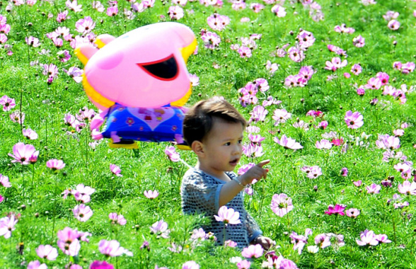 假日出遊好去處!福州花海公園內波斯菊競相綻放