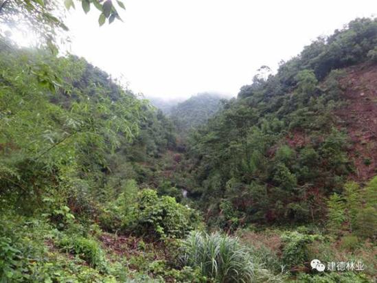 震惊!杭州建德一村主任当选3个月毁林50亩