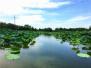 山东省枣庄市台儿庄区林业局认真做好湿地公园空气质量检测工作