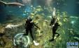 """游客注意安全!泰国""""潜水团""""游船倾覆致5人死亡"""