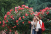 杭城最大的月季園盛花迎客 美景醉人