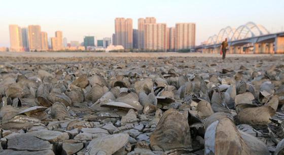 哈尔滨松花江现罕见低水位