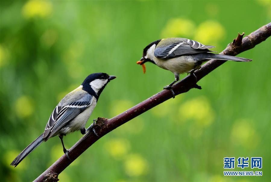 山东长清:寻找初夏大美之鸟