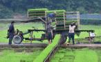 芒种时节农事忙