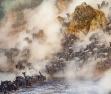 非洲8万牛羚大军正迁徙