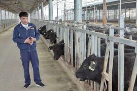 """赵庆荣:""""牛气冲天""""的18岁牛厂长"""