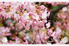 """春分时节品读春分 让你一年""""春风得意马蹄疾"""""""