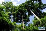 河北省财政厅:建立多元化投入机制 推动森林城市创建
