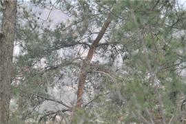 河南罗山:宝贝鸟孕育鸟宝贝